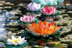 cropped-lotus-4.jpg