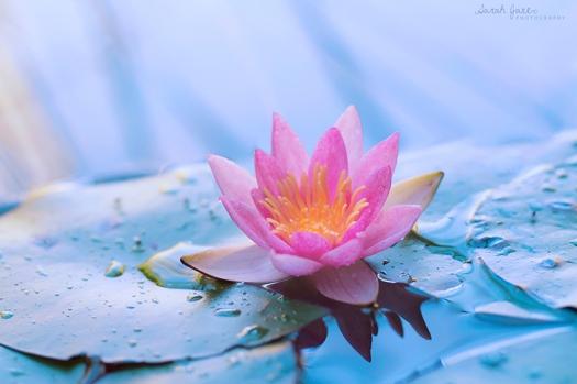 lotus 7