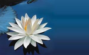 white-lotus-wallpape2