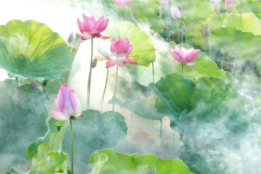 lotus-2528456_1920